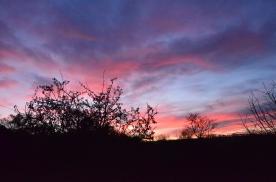 Sunrise 417