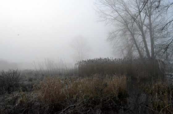 Foggy Marsh
