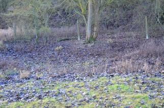 empty-pond