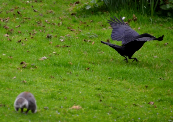 Squirrel and Crow